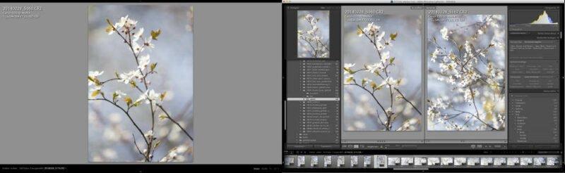 Fotoverwaltung Sofware Lightroom