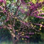 Lensbaby Naturbild