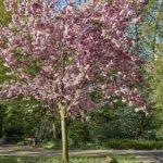 Dies ist der Baum, um den es bei diesem Fotoprojekt geht