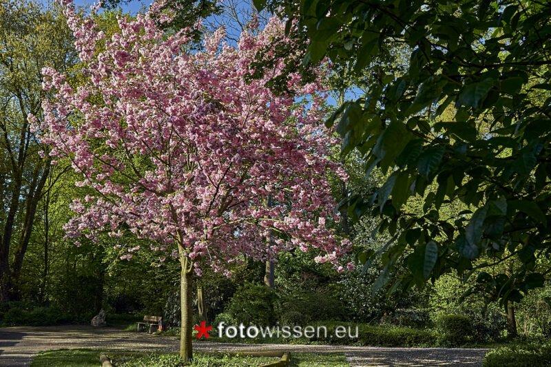 Fotoprojekt 1000 Fotos 1 Objekt, der Baum