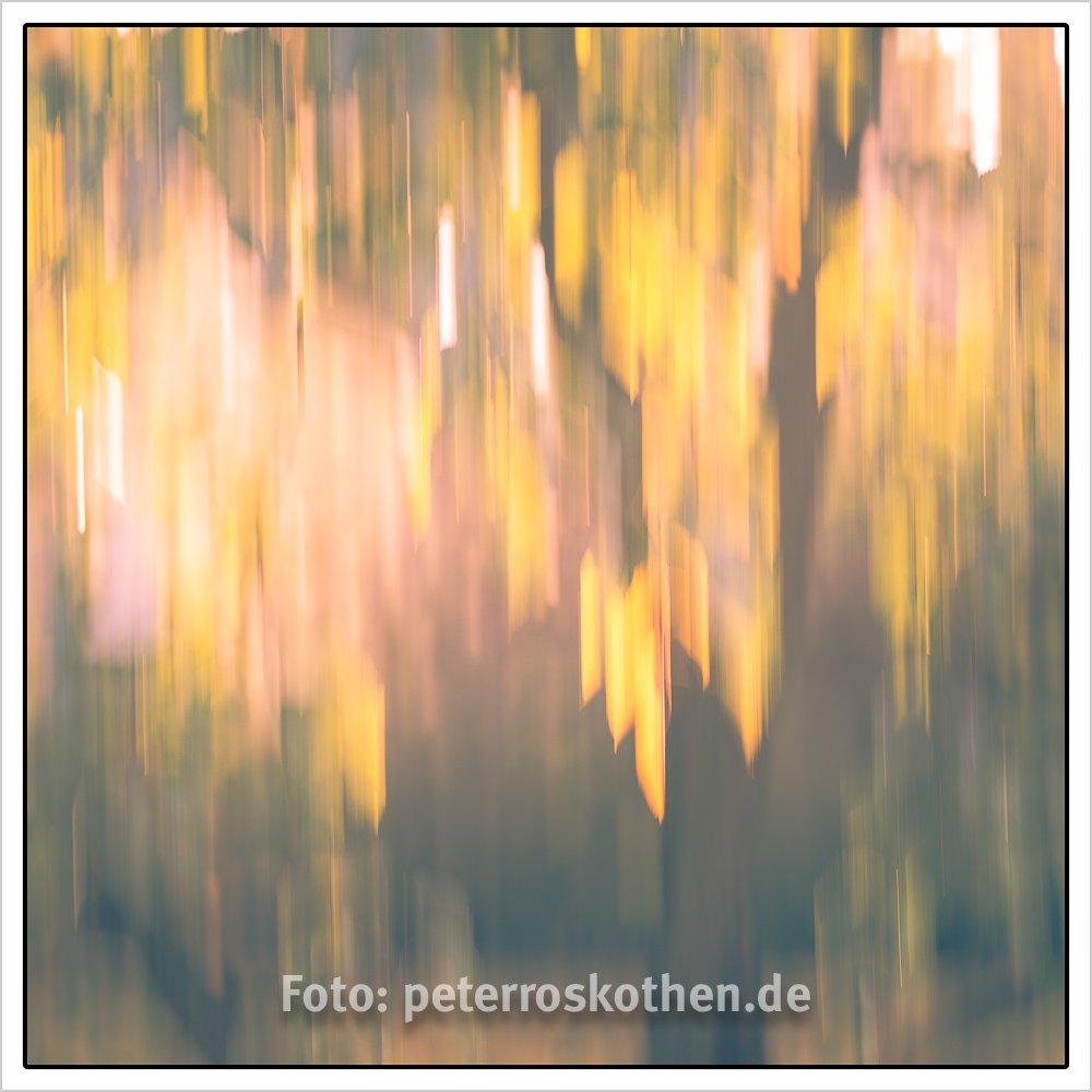 Herbstlicher Park verwischt - Wischtechnik Fotografie