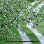 Fotografiert mit der Bridgekamera Panasonic FZ.1000. Foto ohne weitere Bearbeitung, direkt als JPG aus der Kamera