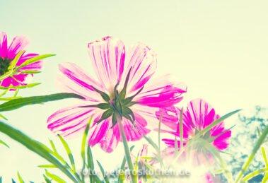 Fotografieren Sie mal aus der Froschperspektive, dann gelingen Ihnen fantastische Frühlingsbilder
