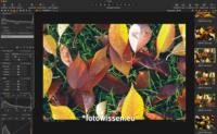 Capture One Pro Bildbearbeitung und Fotoverwaltung