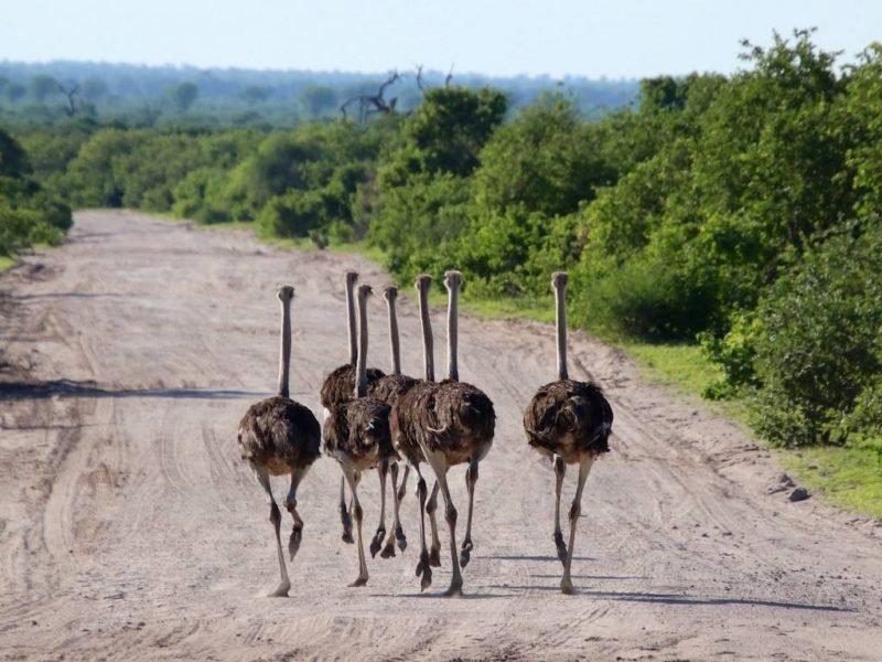 """Das Foto entstand auf einer Safari in Botswana. Es bringt für mich den wörtlichen Sinn """"Safari"""" auf den Punkt: unterwegs sein."""