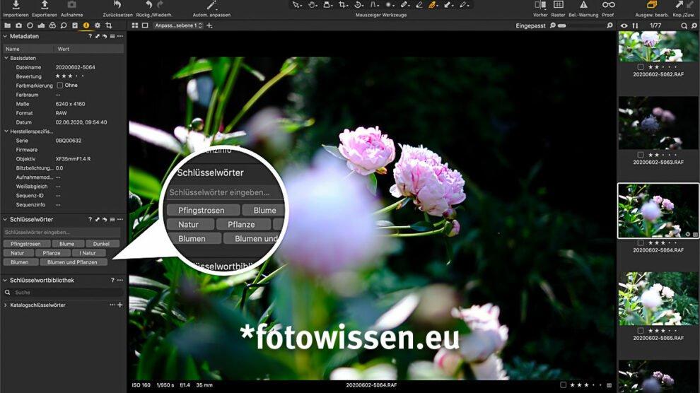 Excire Foto - Auch Capture One zeigt die Stichwörter (Schlagwörter) an.