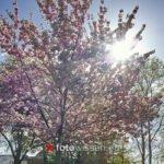 1000 Fotos 1 Motiv Fotoprojekt