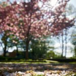 Fotoprojekt 1000 Fotos 1 Motiv