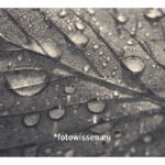 Fotostrecke / fotografische Serie – Nasses Herbstlaub