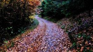Waldweg mit buntem Herbstlaub