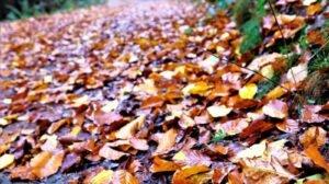 Buntes Herbstlaub am Waldweg