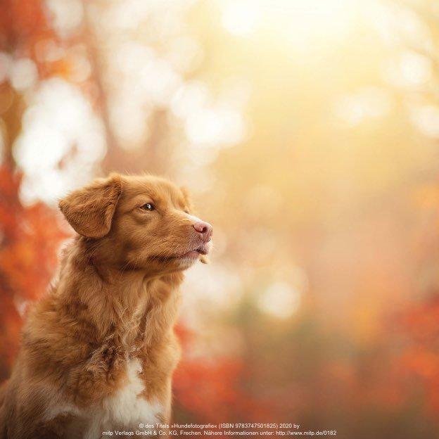 Hundefotografie - Foto