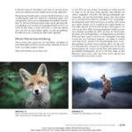 Hundefotografie - Tipps zur Kamerausrüstung