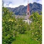 Vellauer Kirche zur Heiligen Dreifaltigkeit inmitten von Äpfeln
