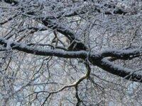 Ausschnitt Winterfoto mit Fujifilm GFX 50s