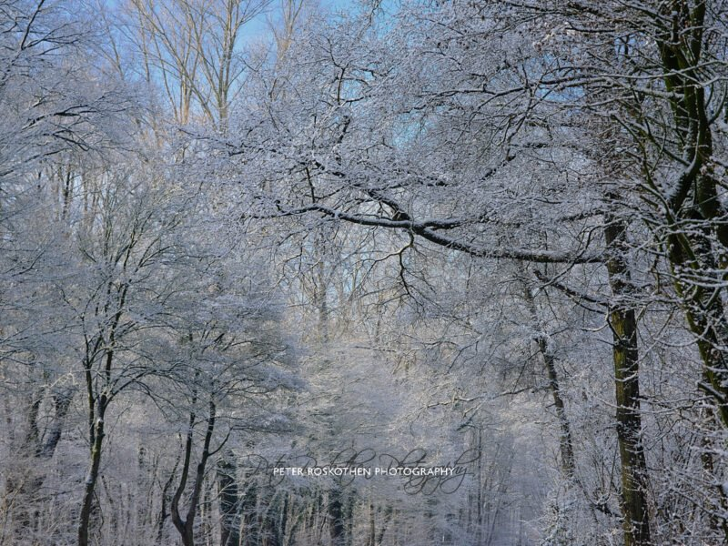 Winterfoto mit Fujifilm GFX 50s