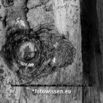 Test Bildqualität Fujifilm GFX 50S ISO 12800 Ausschnitt mit DeepPrime