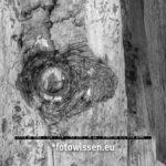 Test Bildqualität Leica Q2 Mono ISO 100 Ausschnitt