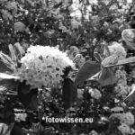 Testfoto Leica Q2 Monochrom