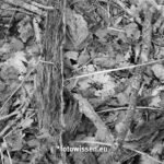Schwarzweiß Foto mit Fuji GF80mm F/1.7
